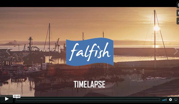Falfish Timelapse